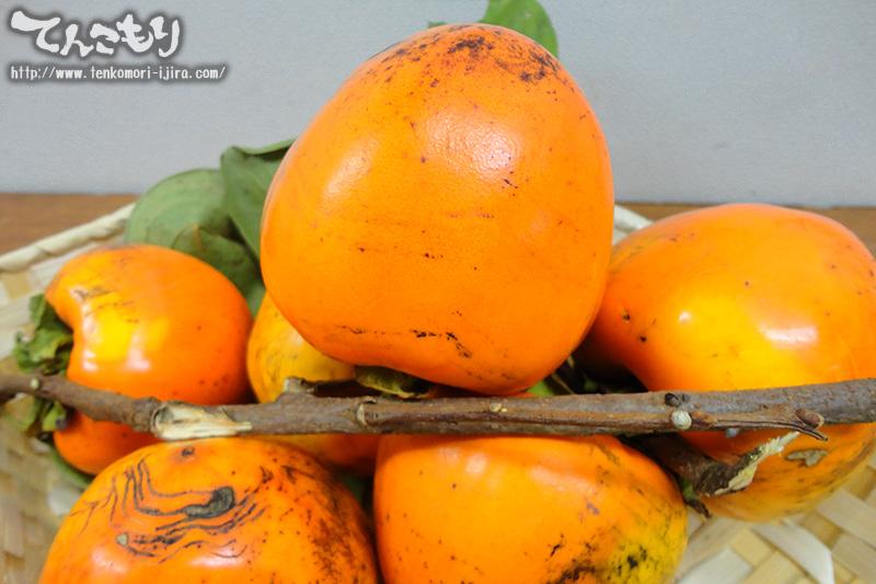 秋の果実「富士柿」